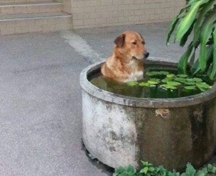 cane vasca idromassaggio piante
