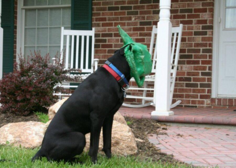 cane infila testa annaffiatoio