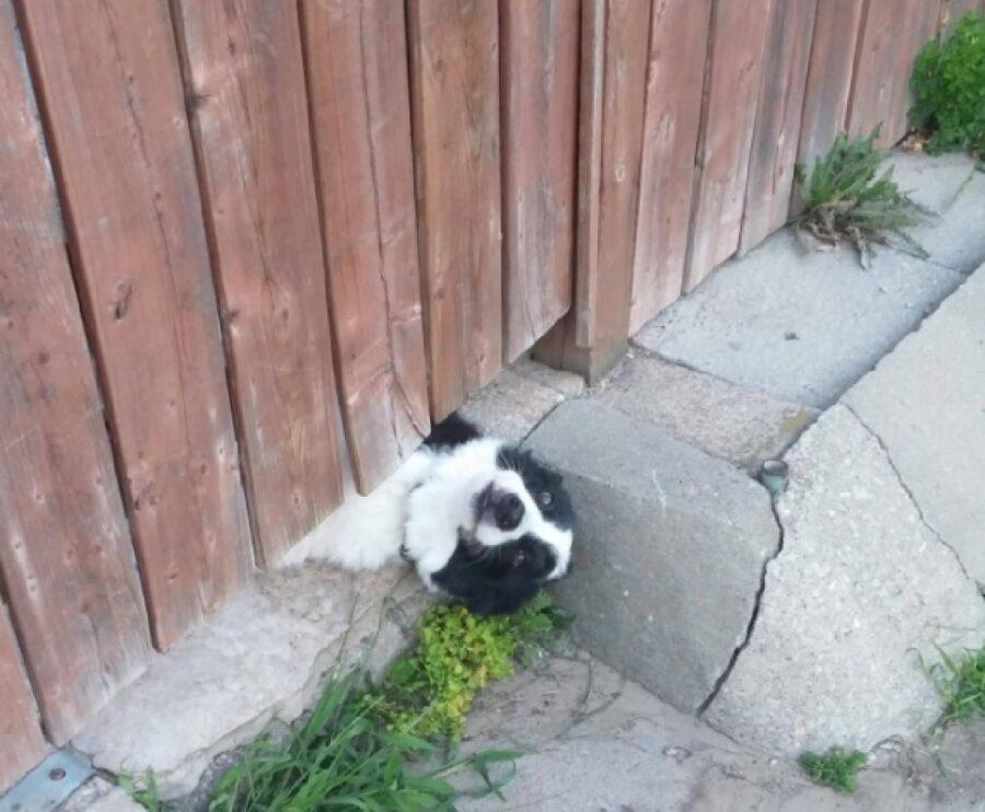 cane si sporge oltre recinzione