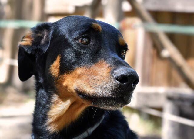 cane sguardo tenero