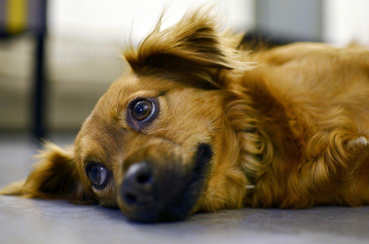 cane si sdraia rilassato