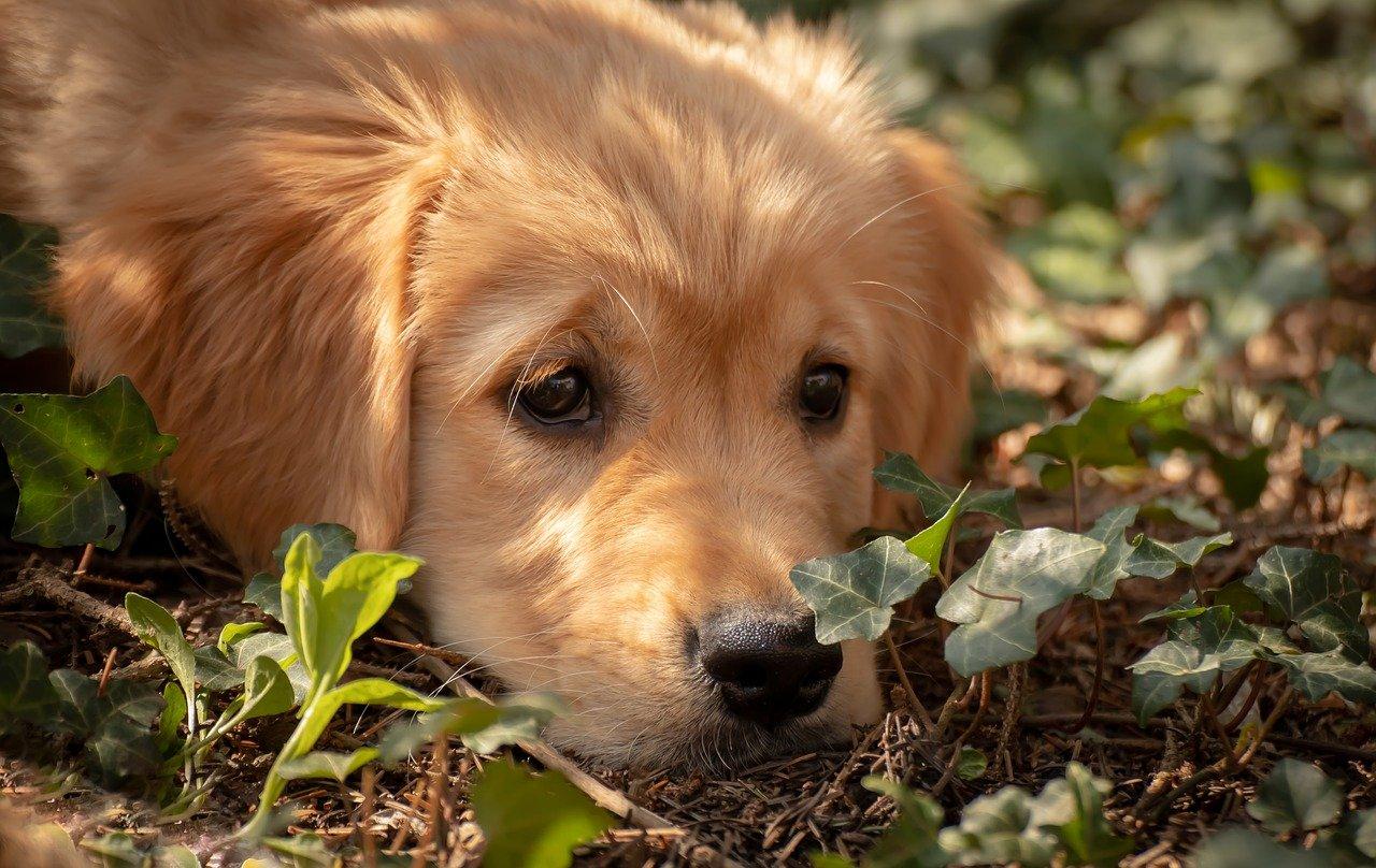 cane sguardo dolcissimo