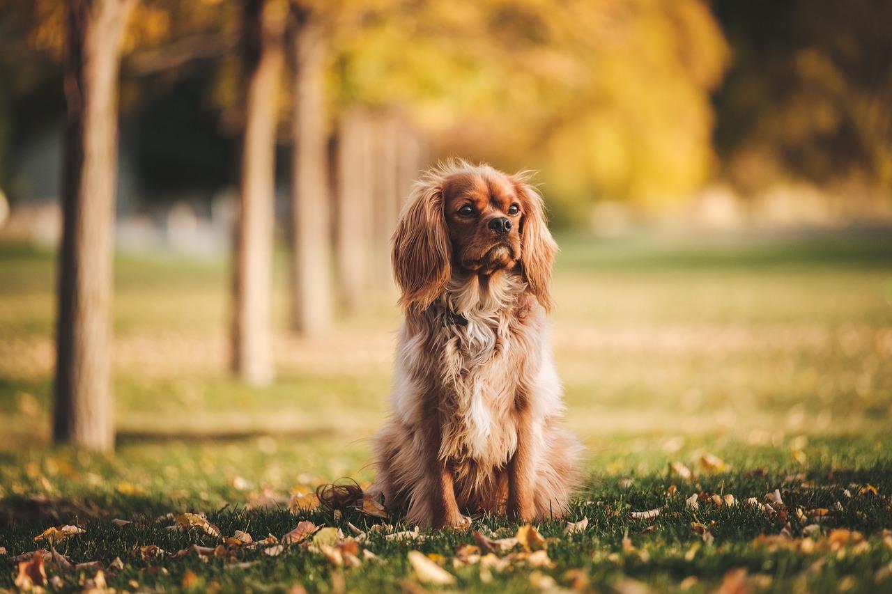 cane in giro