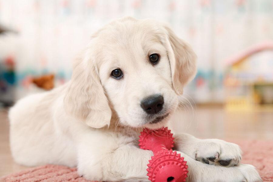 cucciolo di cane butta i giochi nella ciotola dell'acqua
