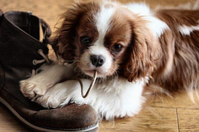 cucciolo di cane molesto