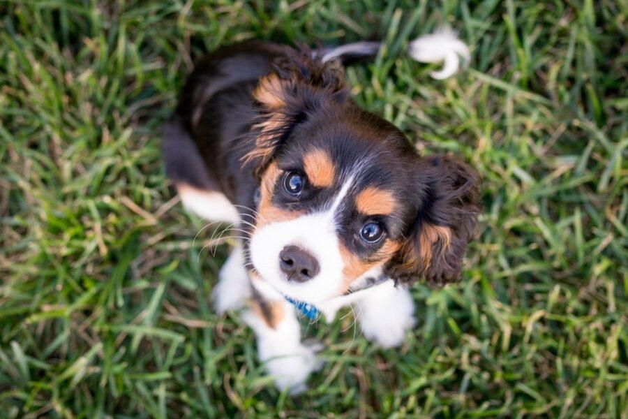 cucciolo di cane sull'erba
