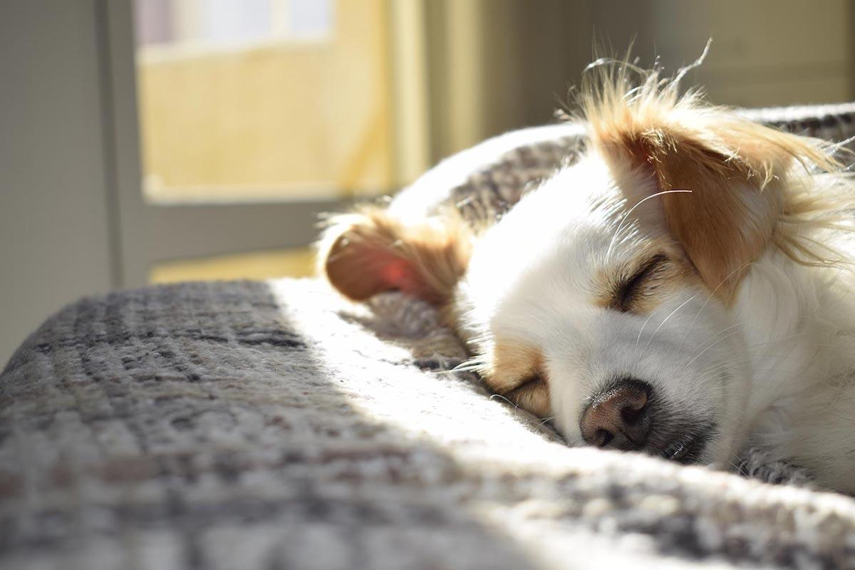 cucciolo di cane dorme al sole