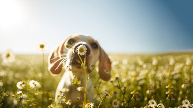 cucciolo di cane annusa i fiori