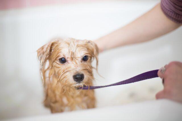 cucciolo nella vasca da bagno