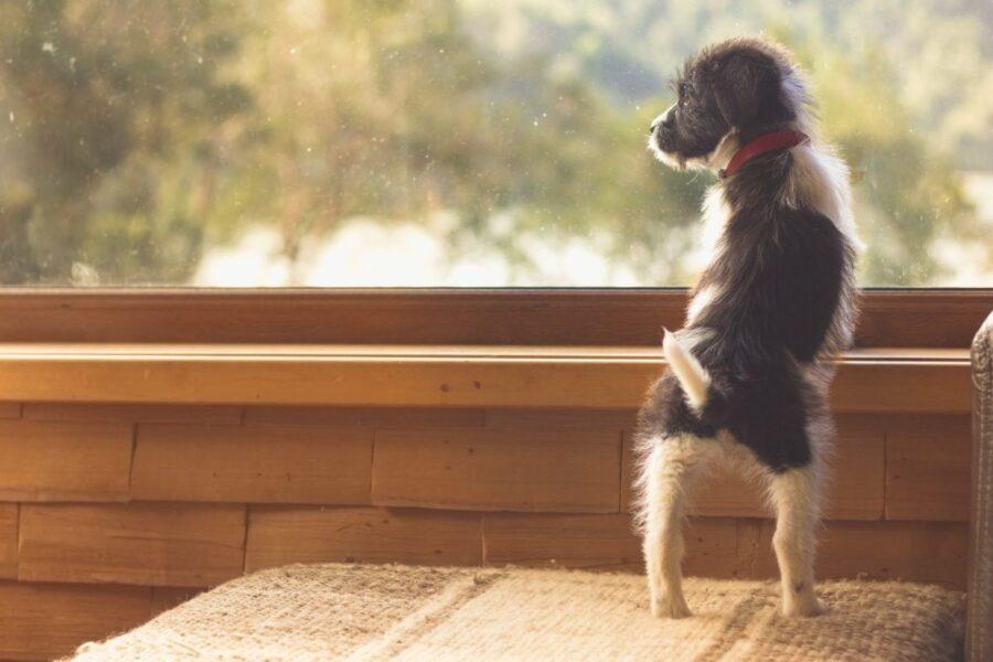 cucciolo di cane in equilibrio su due zampe