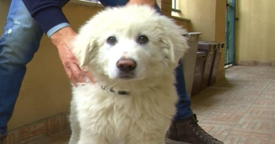 Golia, cucciolo adottato da Mario Tindari