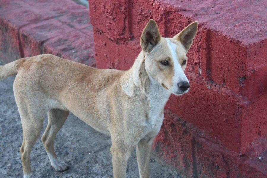 cane accanto a un muro rosso