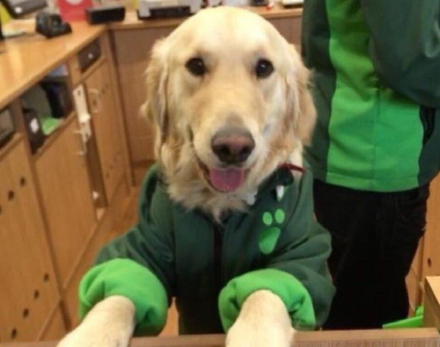 cane con divisa verde lavoro