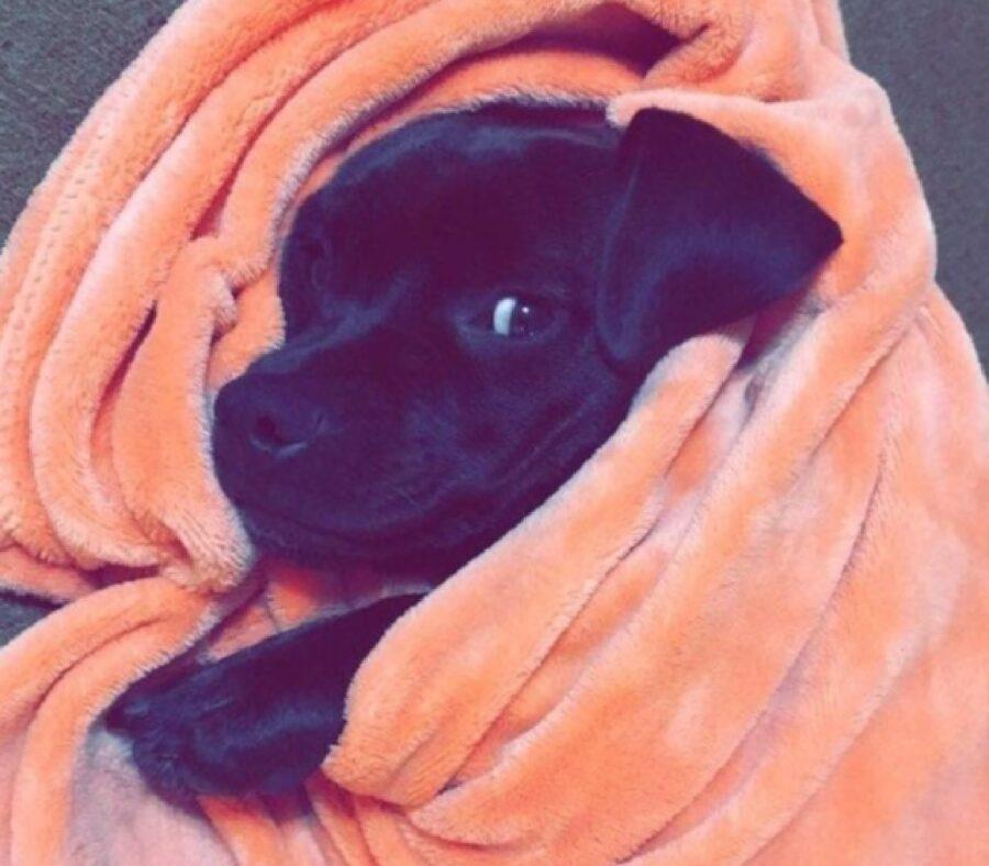 cane non dorme senza coperta