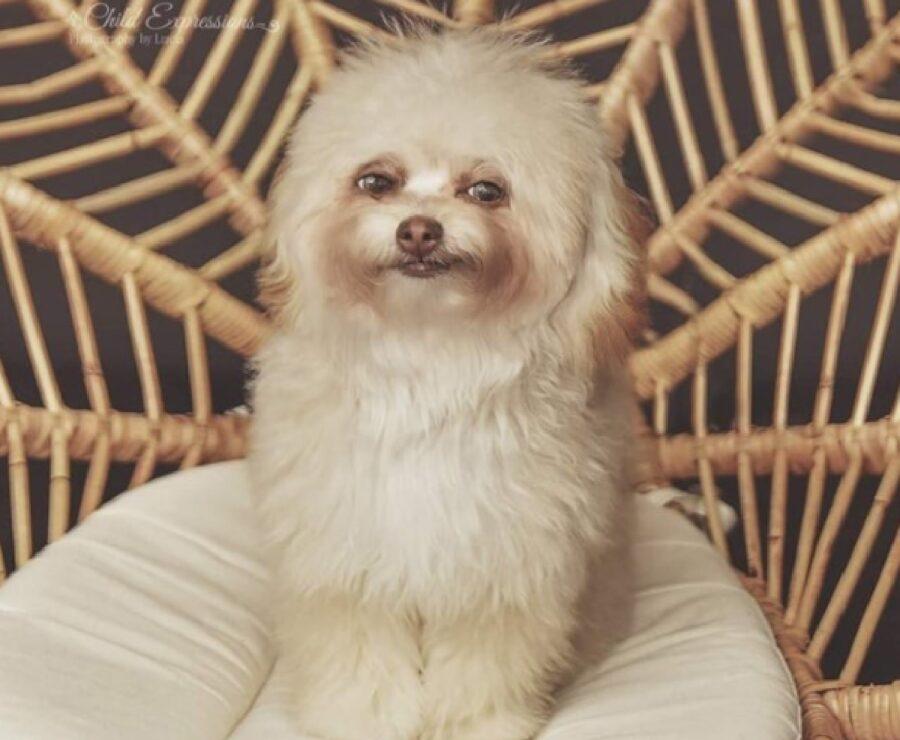 cane festaiolo viso felice