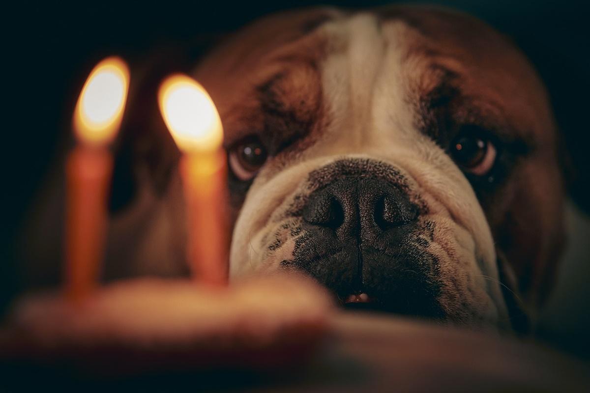 cane con candeline