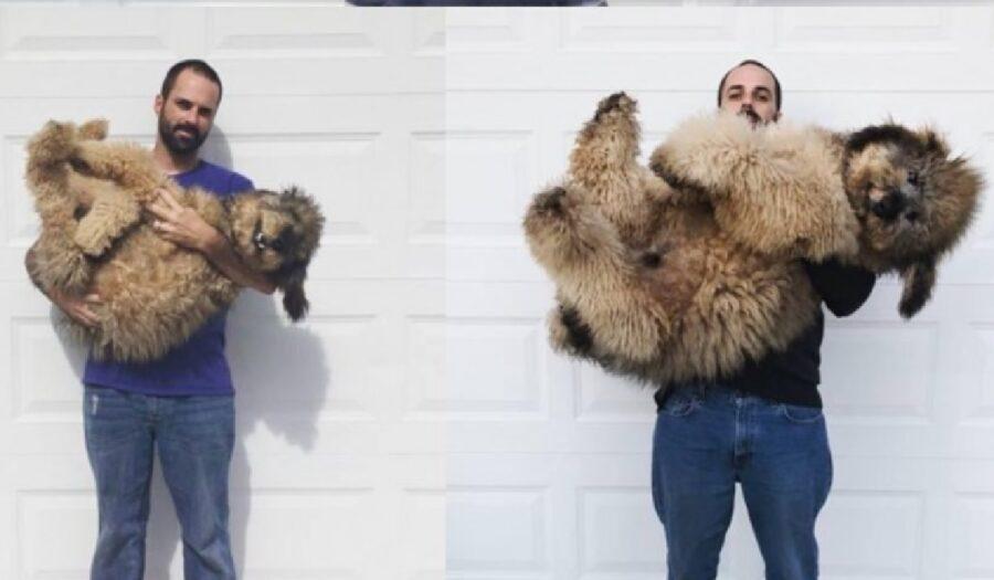 cane grande pelo lungo
