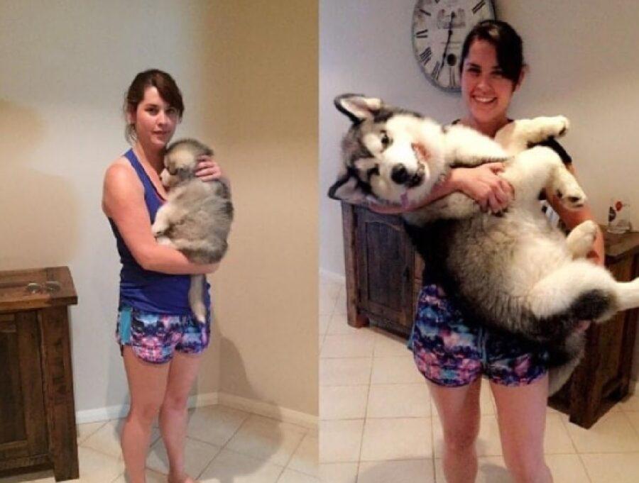 cane husky prima e dopo