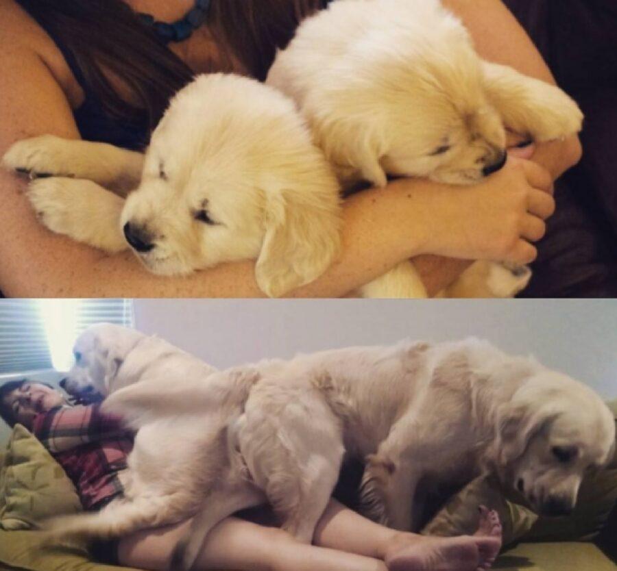 cane fra braccia di mamma coppia