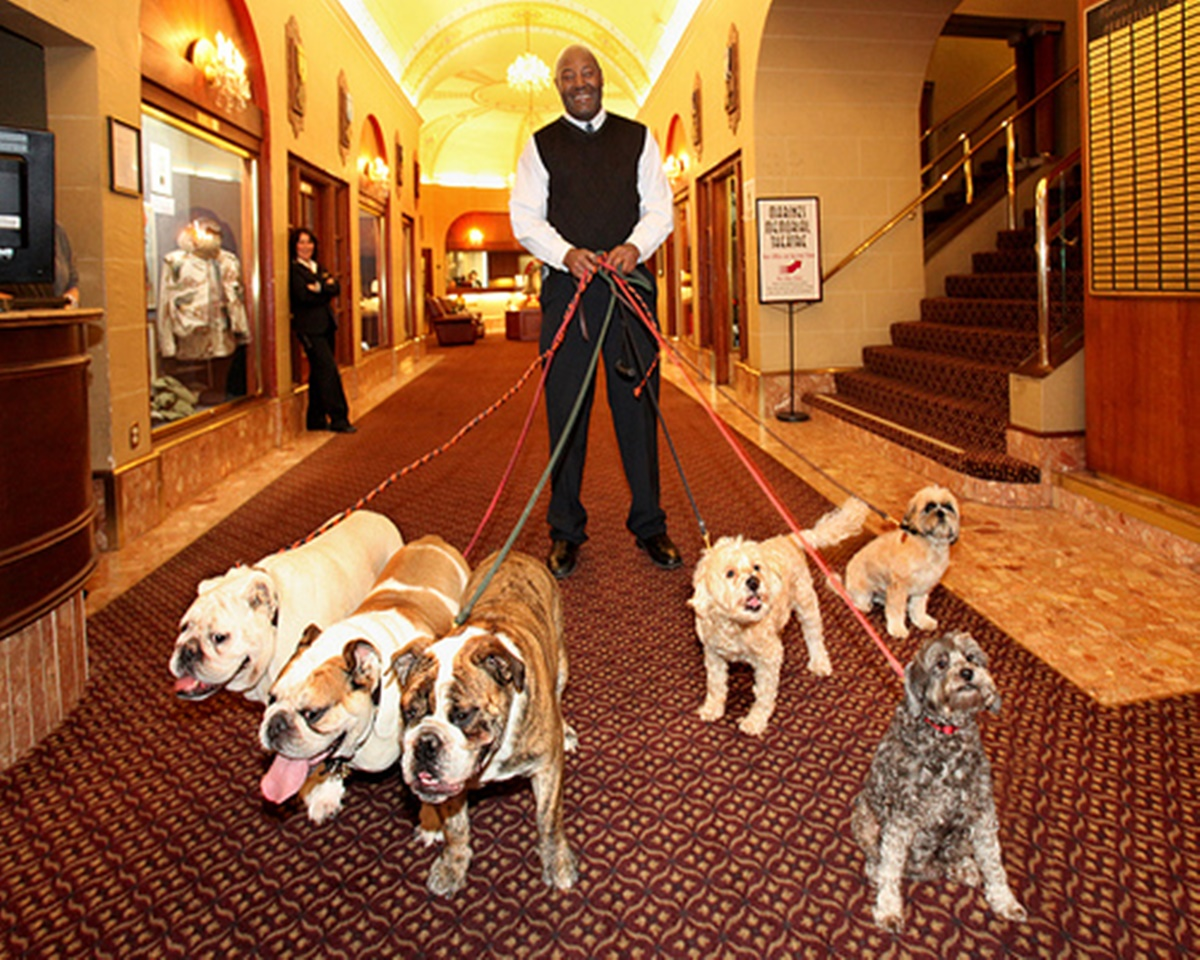 cani in hotel