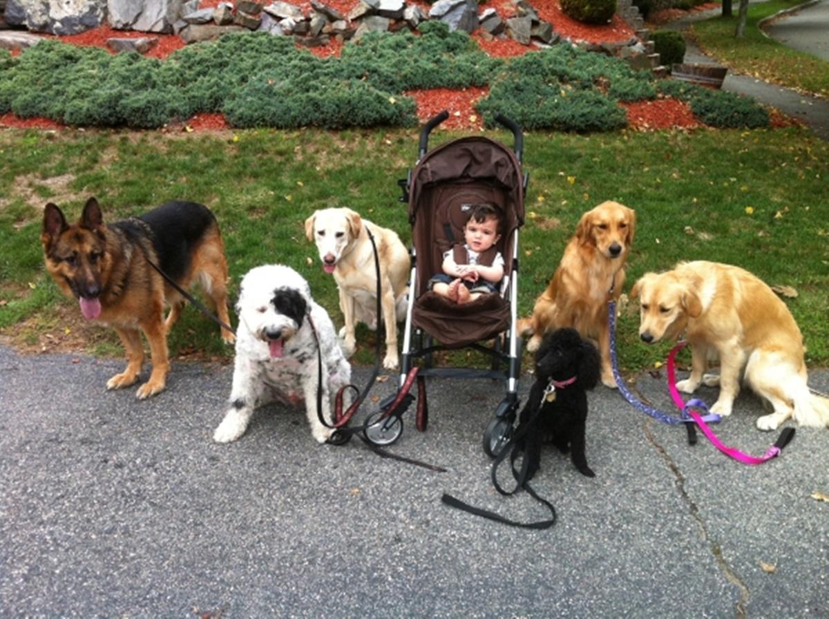 cani al parco con bambino