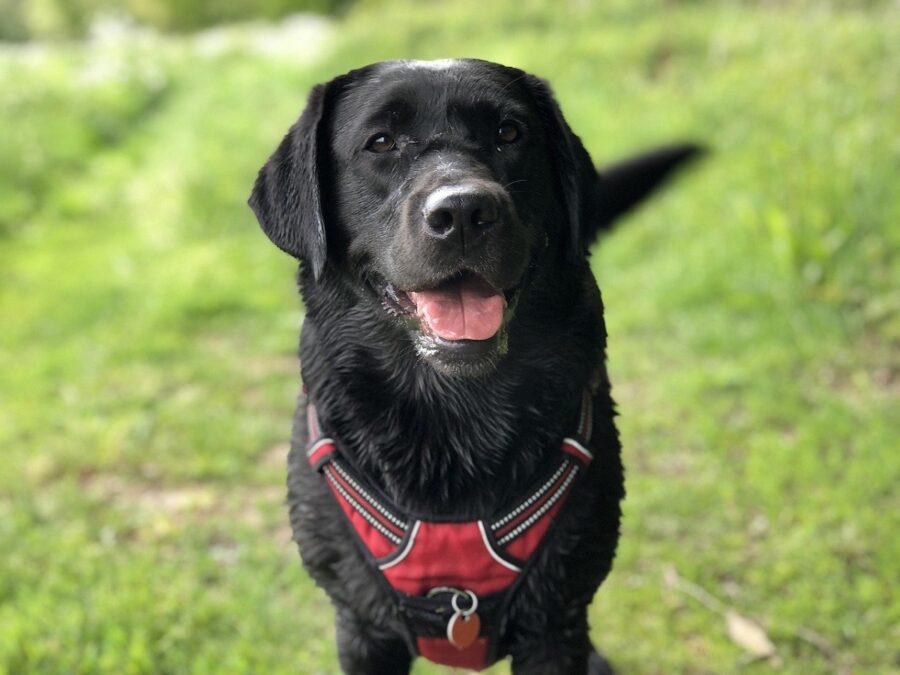 cane gioia osserva