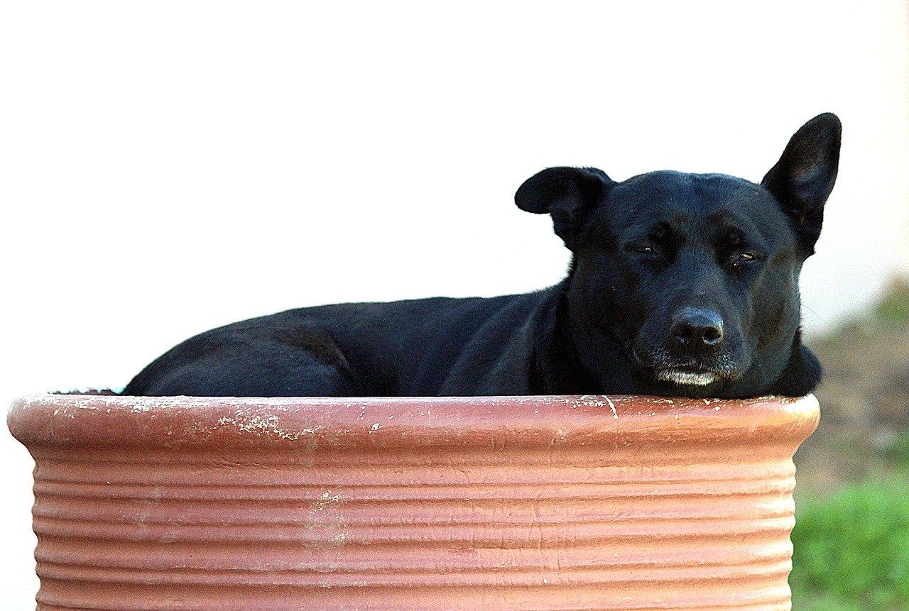 cane dentro la coccia