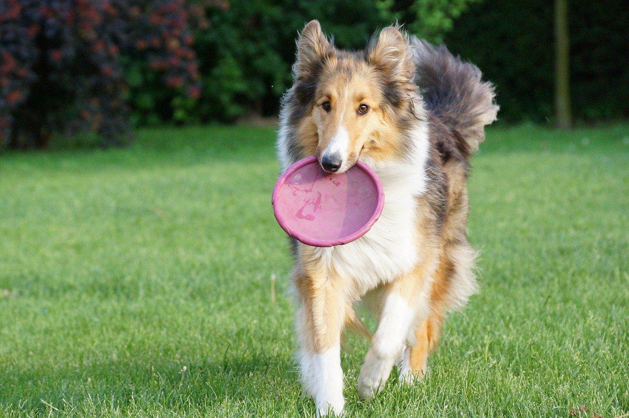 cane e frisbee