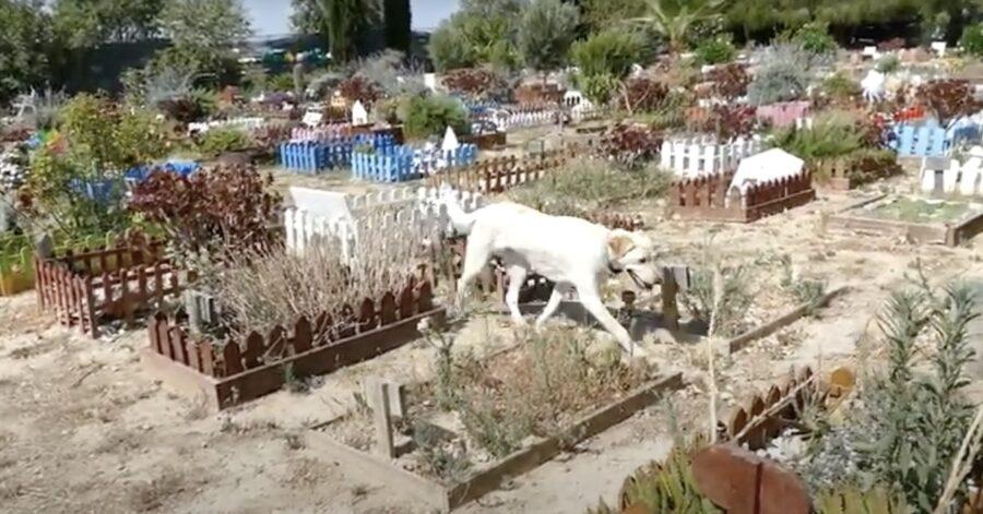 cane al cimitero