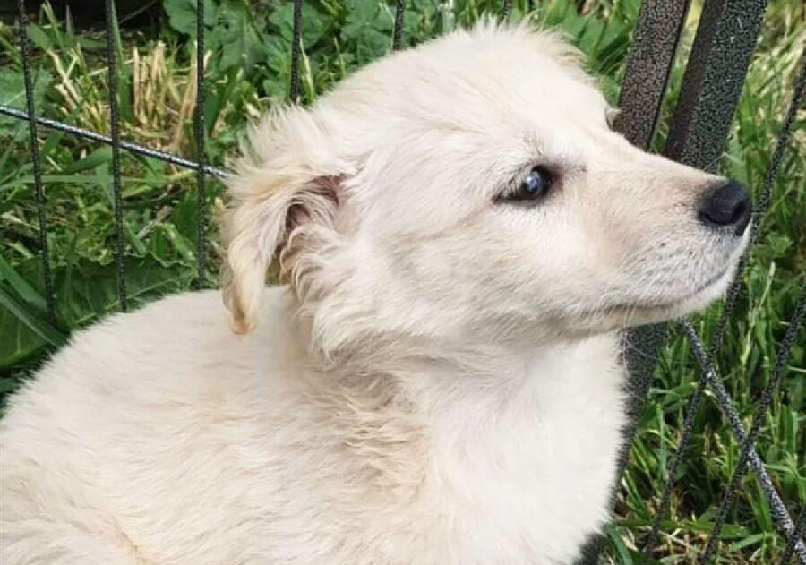 cucciolo cane bianco nebbia dietro siepe