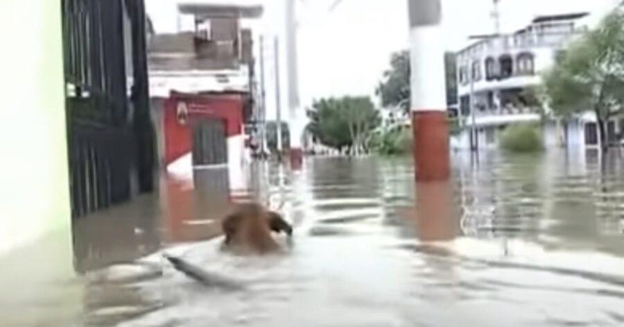 cagnolina in acqua