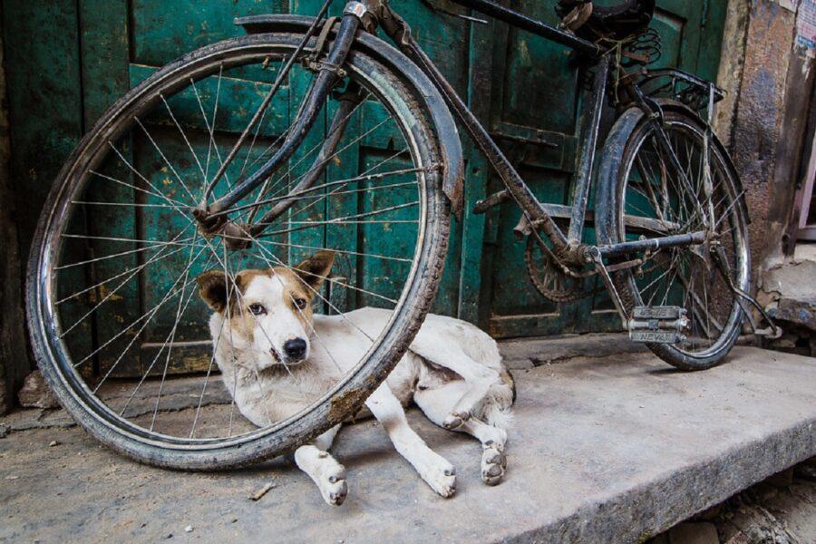 cane sdraiato bici