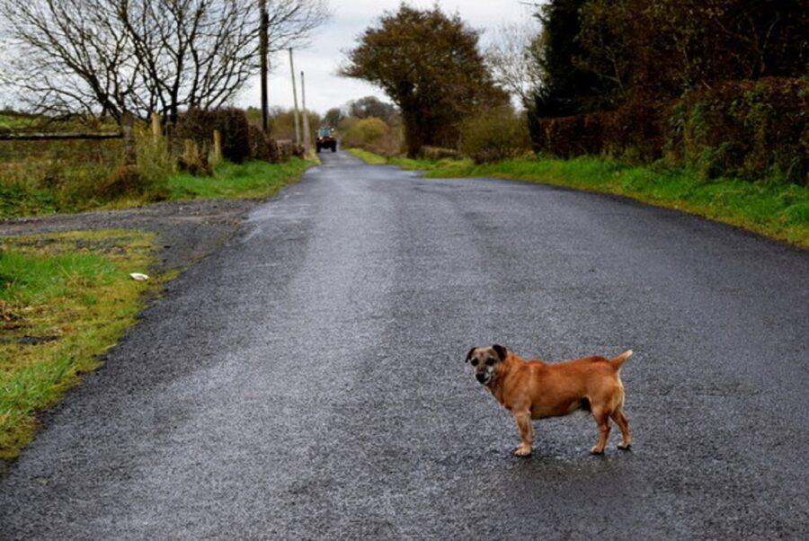 piccolo cane cammina