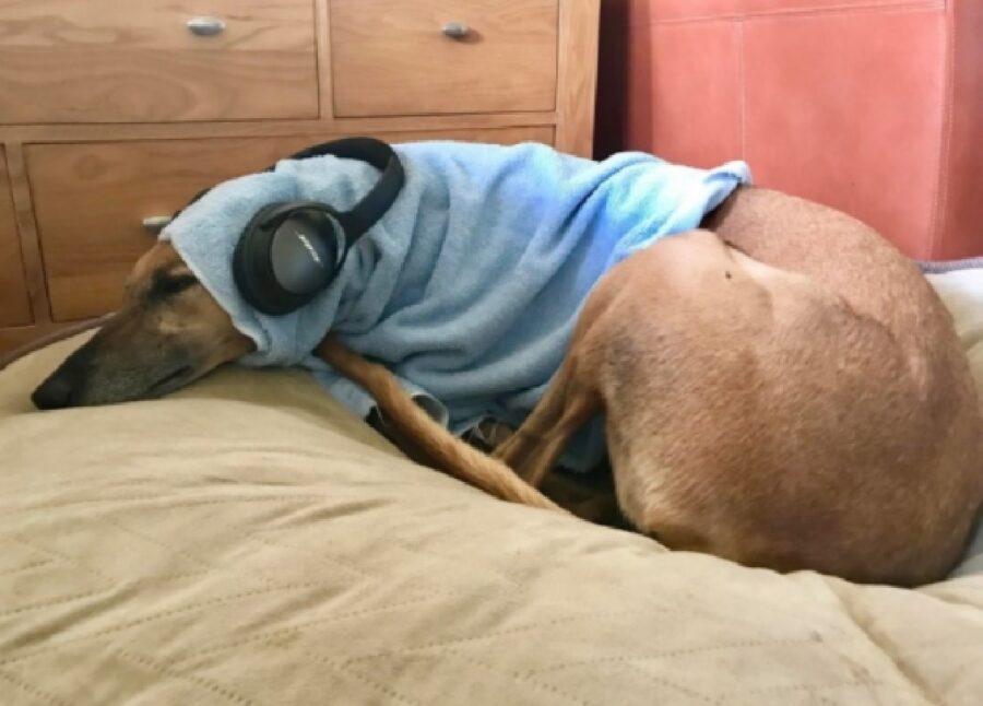 cane relax dopo sport