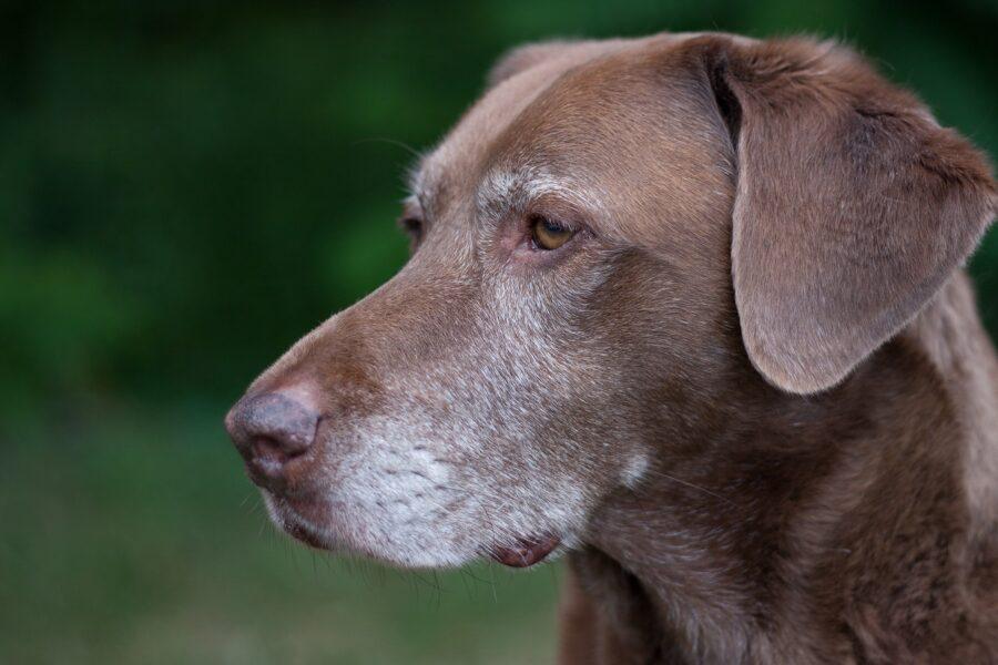 cane guarda punto