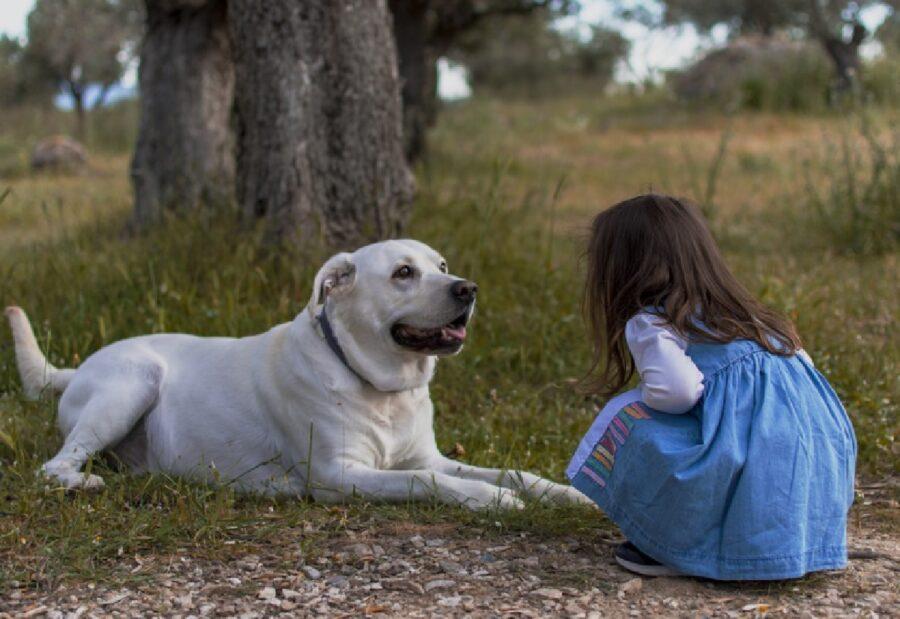 ragazzina vicino cane guarda occhi