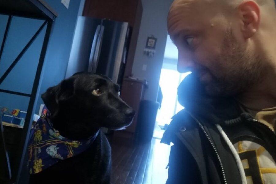 cane nero guarda negli occhi