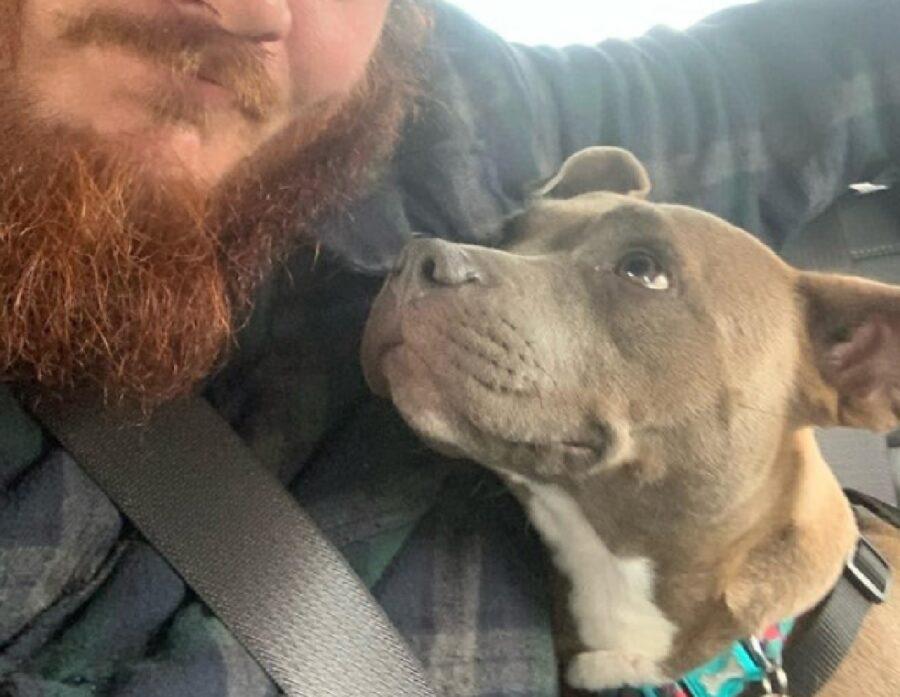 cane guarda barba del proprietario