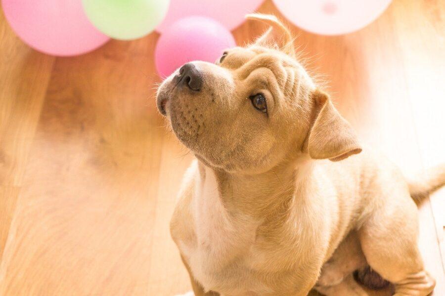 cucciolo festa palloncini