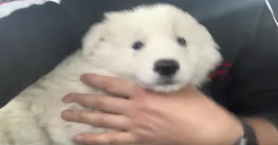cucciolo in braccio al suo salvatore