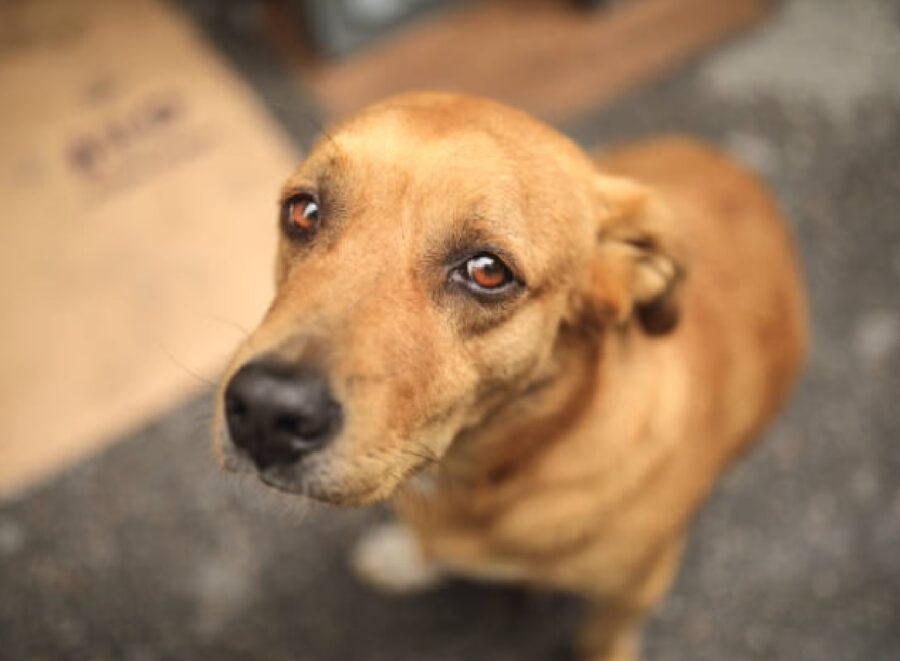 cane sta male perché ingerisce qualcosa