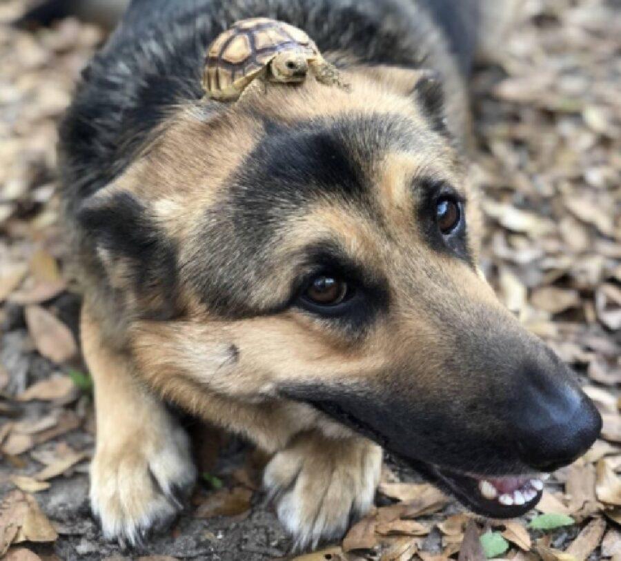 cane con tartaruga sulla testa
