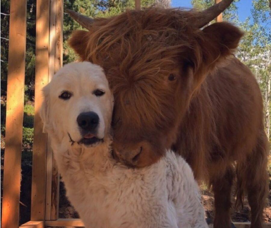 cane insieme altro animale