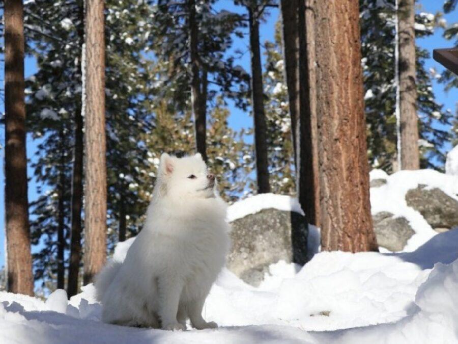 cane sulla neve fiero