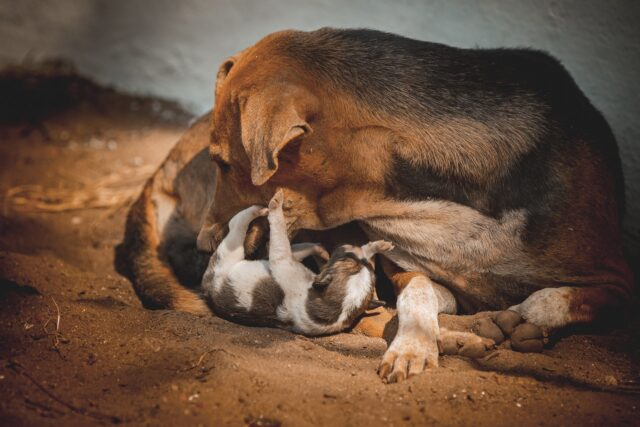 mamma randagia e cucciolo
