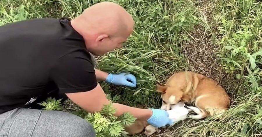 volontario aiuta cagnolina abbandonata