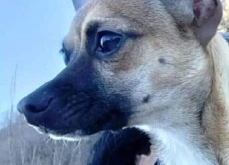 rambo cucciolo scomparso comune provincia avellino