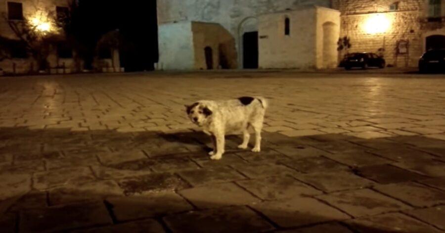 cane mascotte di Molfetta in piazza