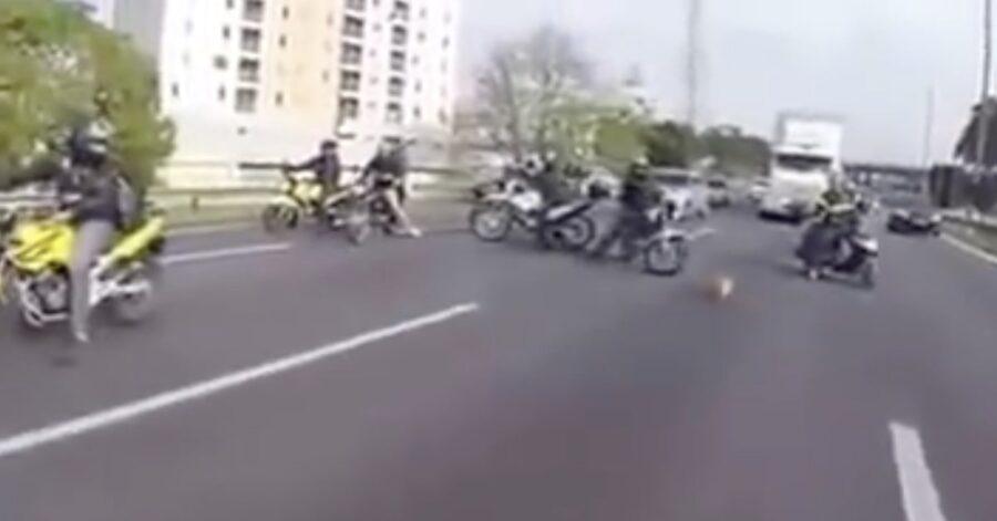 cane salvato in mezzo al traffico