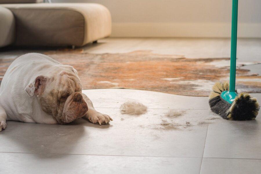 pulire i peli del cane